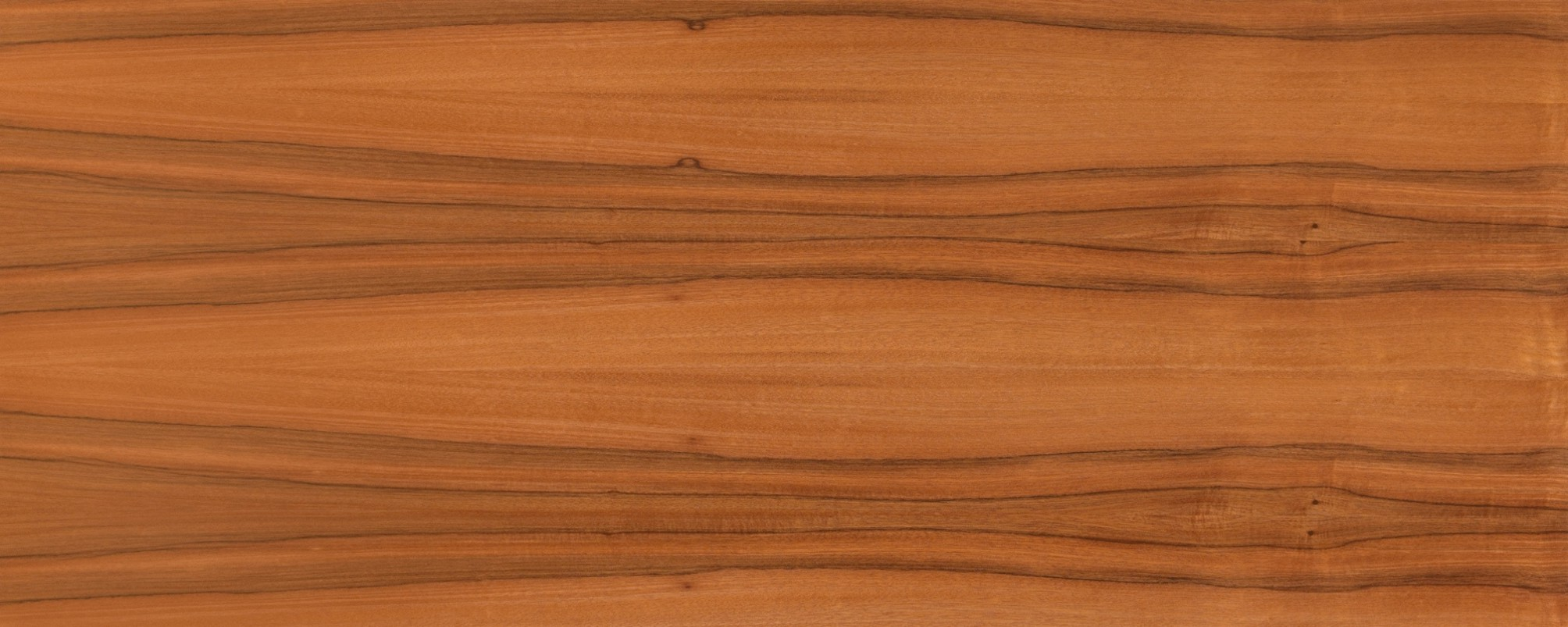 ON66 orech bolívijský